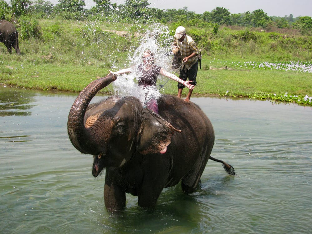 Chitwan nationalpark i Nepal