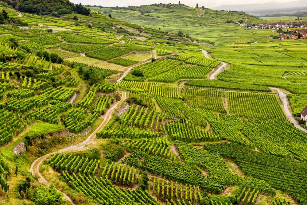 Vinmarker i Alsace - Frankrig