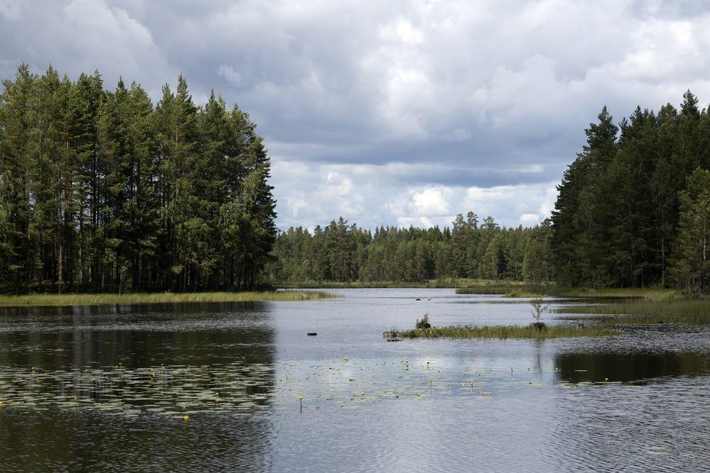 Glaskogens naturreservat - Värmland i Sverige