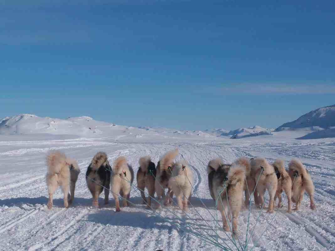 Travelafoot - Hundeslæde i Grønland