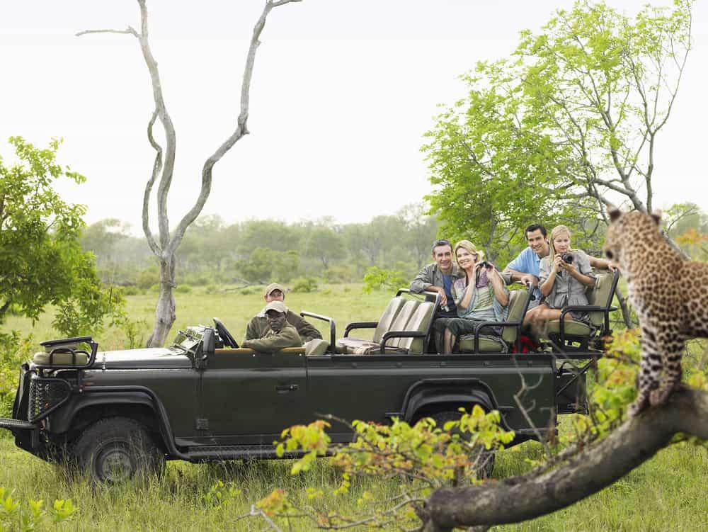 Safari i Kruger National Park - Afrika