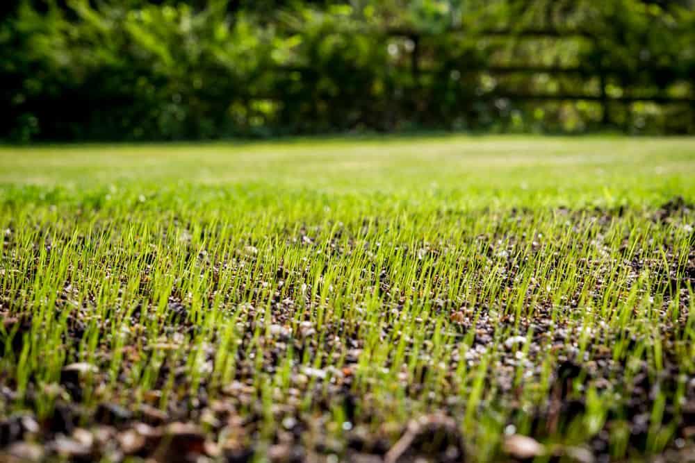 Anlæg en ny græsplæne