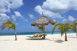 Strand og palmer på Aruba, rejser