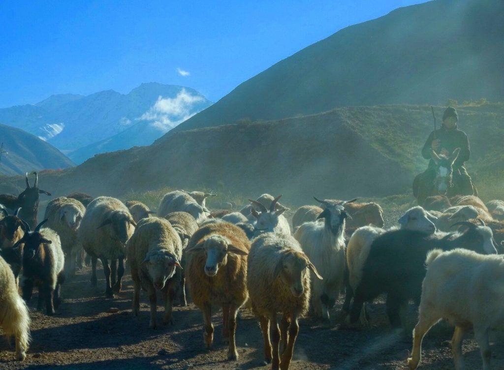 Kirgsisistan - ørn - rejser