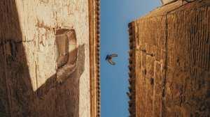 Spanien - Toledo - fugl - rejser