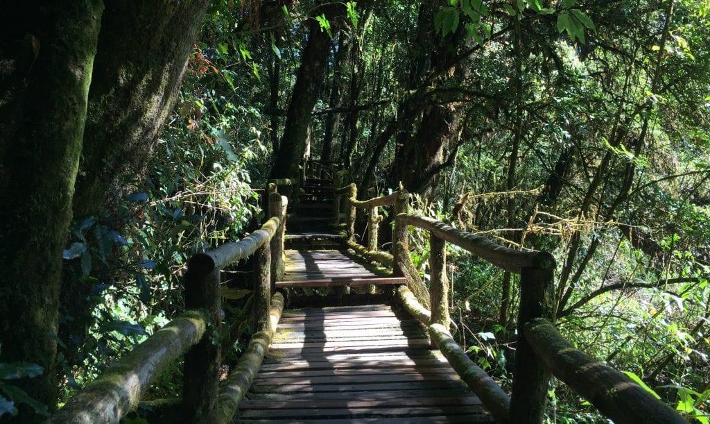 Thailand - trekking, skov - rejser