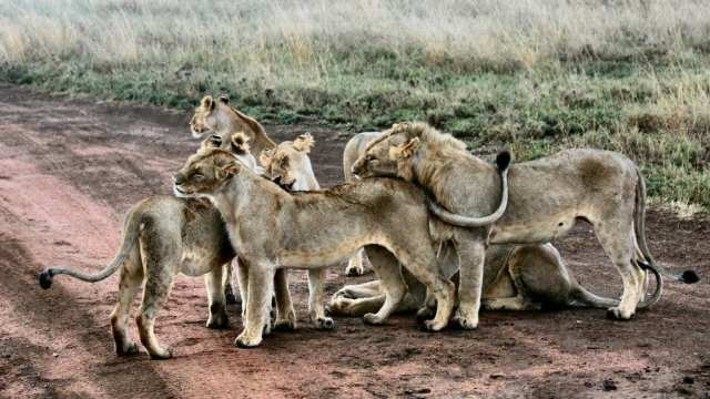 Tanzania - Serengeti ngorongoro crater travel