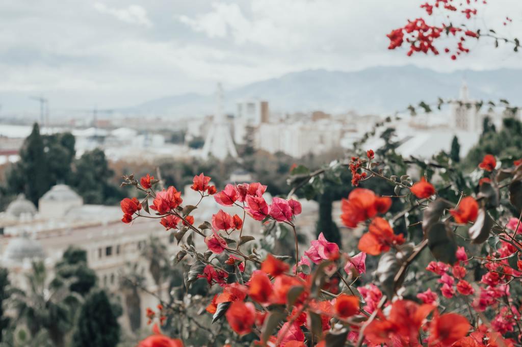 Spain Malaga city flowers travel