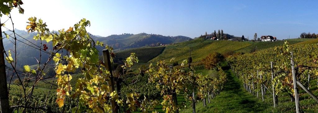 Østrig - Styrien, vinmarker - rejser