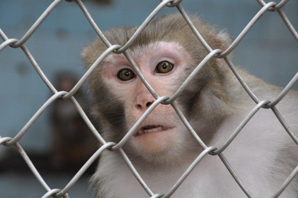 abe bur dyr - rejser