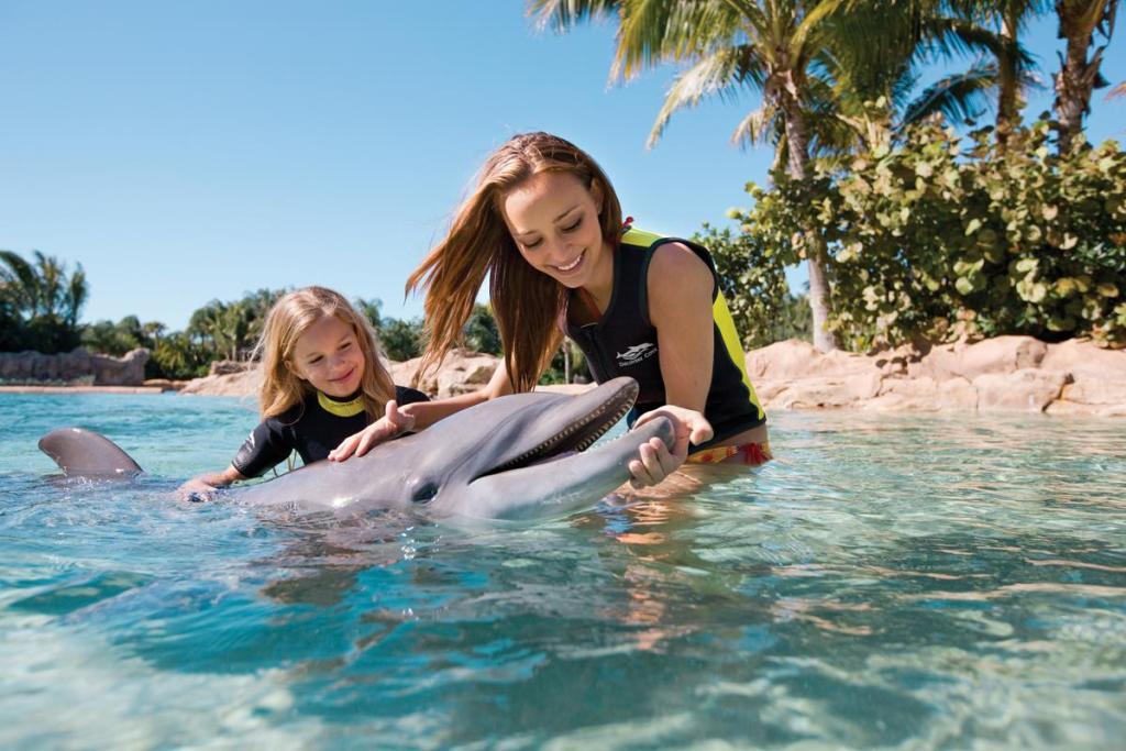 Børn familie delfin rejser
