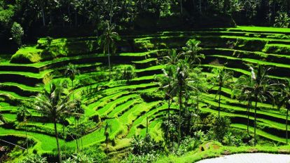 Indonesia Bali, nature, rice fields - travel