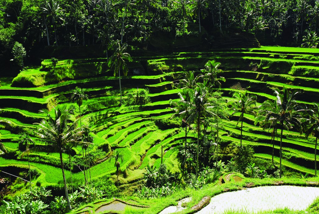 Indonesien, natur, rismarker - rejser