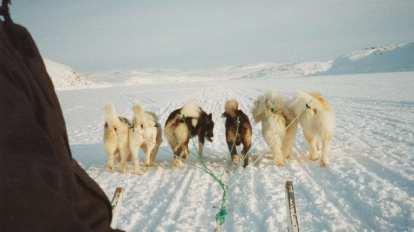 Grenland - pseće saonice - putovanja