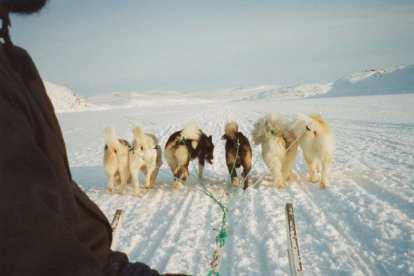 ग्रीनलैंड - कुत्ता स्लेज - यात्रा