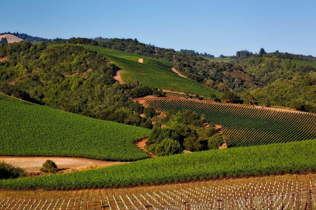 USA - Californien, vinmark, natur, napa valley - rejser