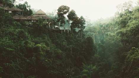 Regnskov - Borneo - Rejser