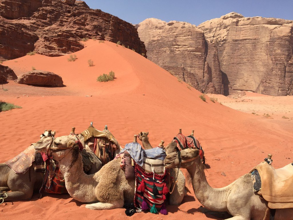 Jordan - Wadi Rum - kamel - rejser