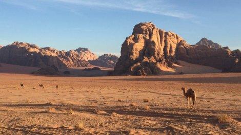 Wadi Rum landskab