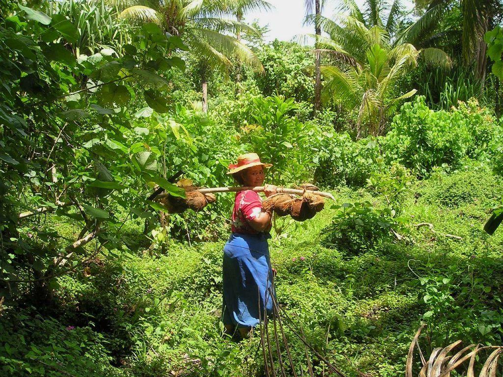 Samoa - kvinde - jungle