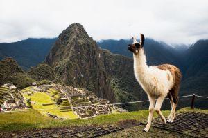 Peru - Machu Picchu - Lama - Južna Amerika