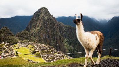 Peru - Machu Picchu - Lama - South America