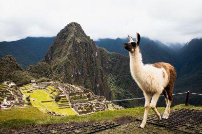 Peru - Machu Picchu - Lama - sydamerika