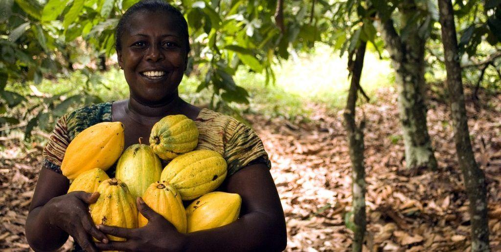 Ghana - kvinde, kakao - rejser