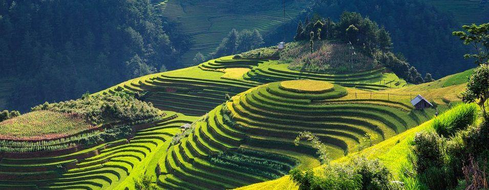 Vietnam - rizières, montagnes - voyage