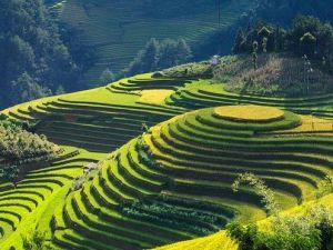 Vietnam - rýžová pole, hory - cestování