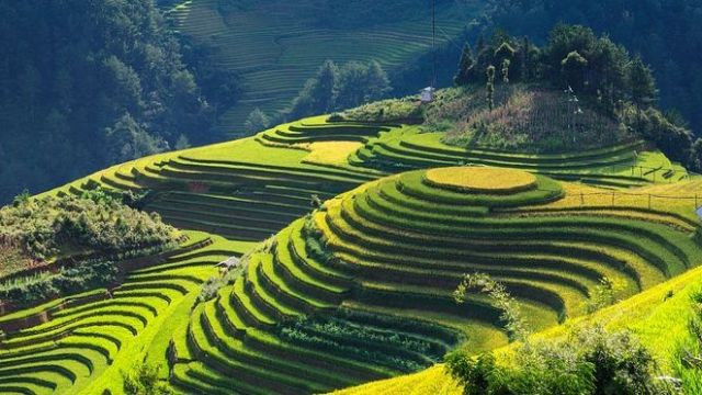Vietnam - rice fields, mountains - travel