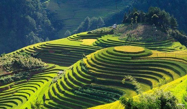Vietnam - rismarker, bjerge - rejser