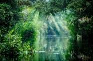 Brasilien - Amazonas - Flodudsigt - Rejser