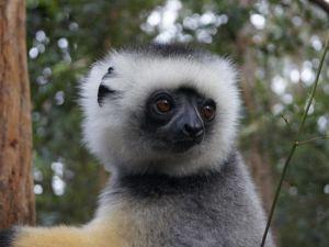 Lemur - Madagascar - travel