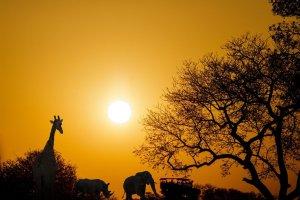 Sydafrika - rejser