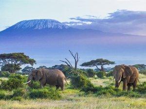 Safari - Tanzanie - voyage