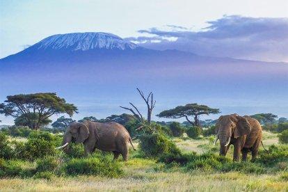 サファリ-タンザニア-旅行