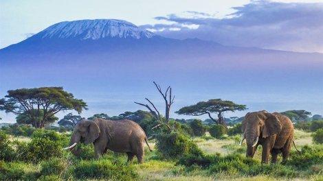 Safari - Tanzania - travel