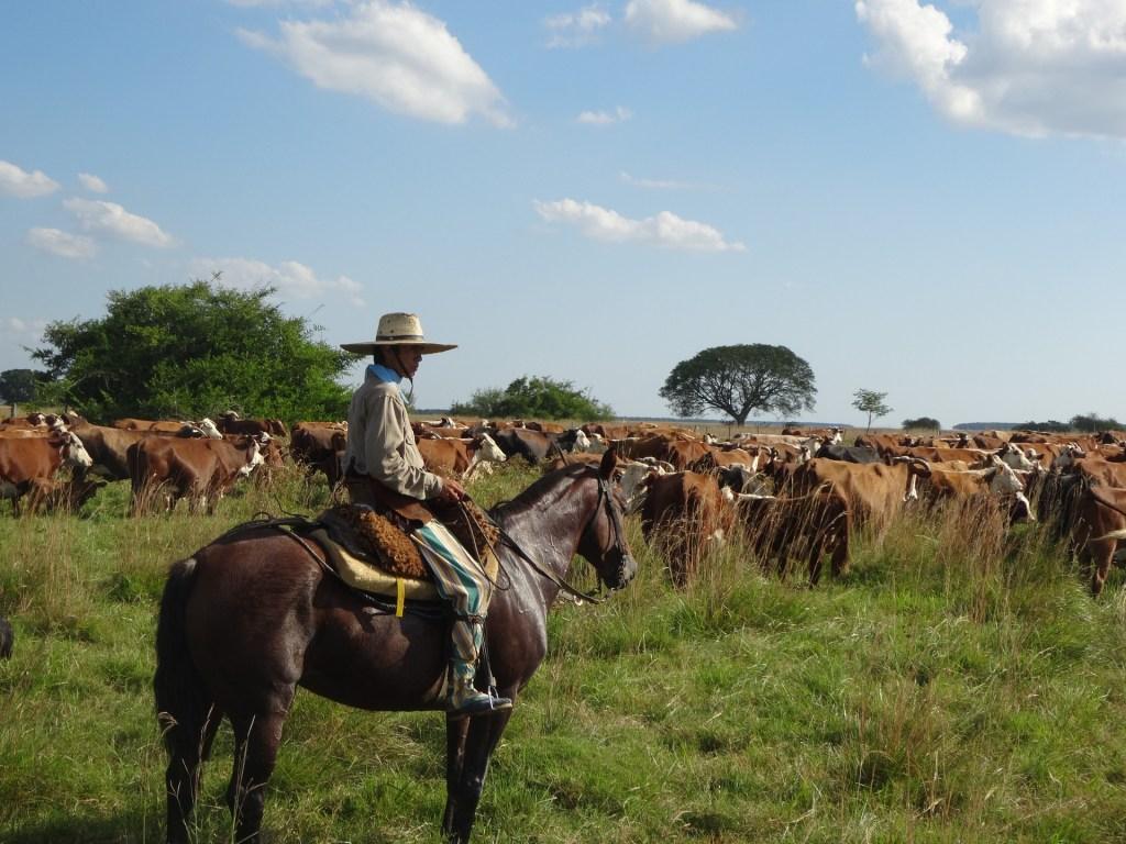 gaucho, rejser, argentina, kvæg, hest, cowboy mendoza,