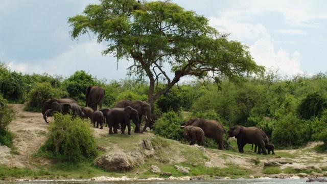 Africa - Uganda - gorilla trekking - travel