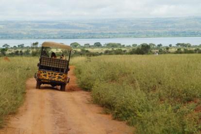 Uganda - safari - rejser