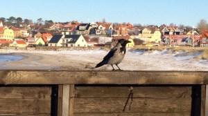 Danmark Nordsjælland Hundested Trekanten rejser