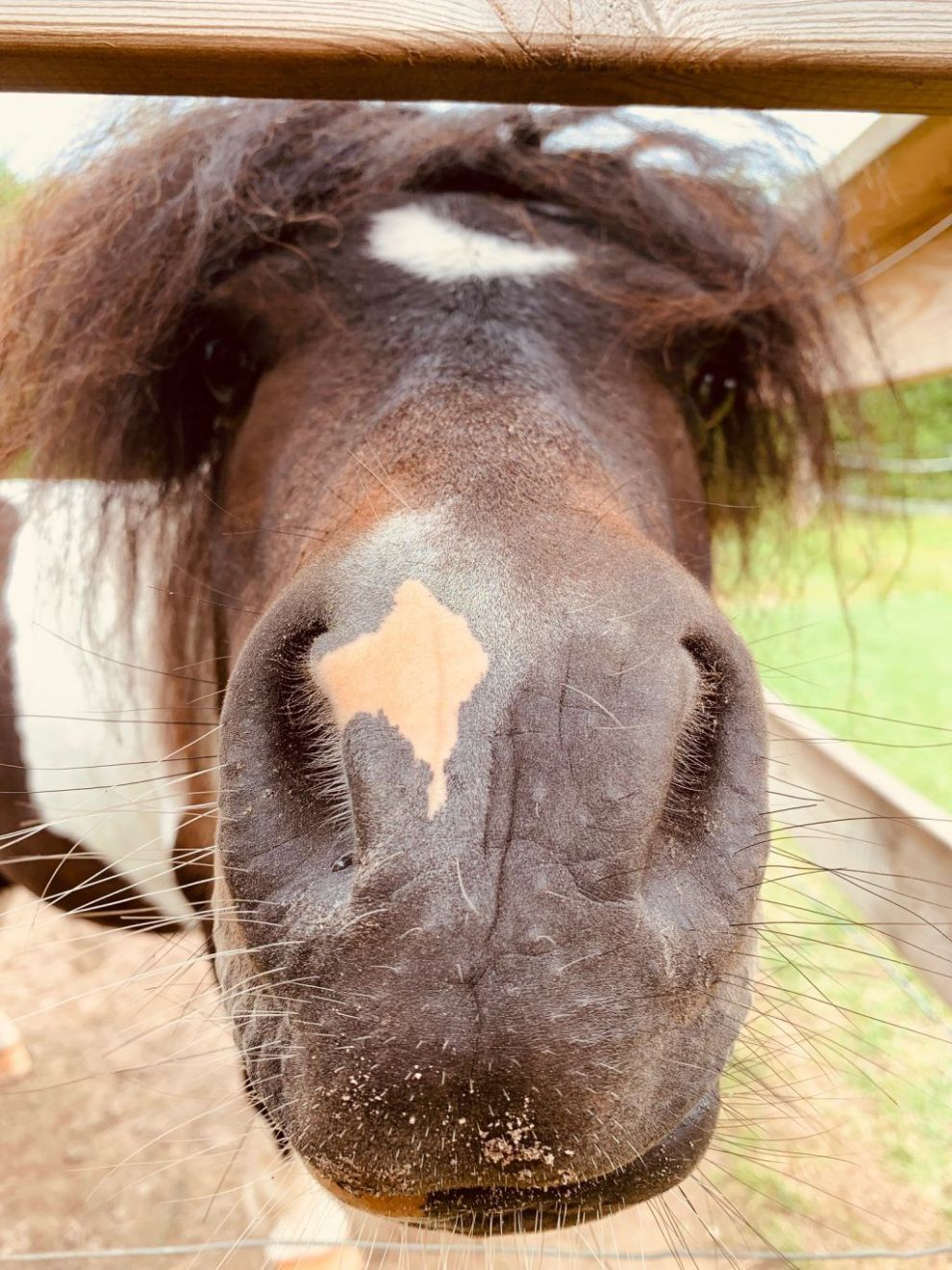 Denmark Hjortdal animal farm horse travels