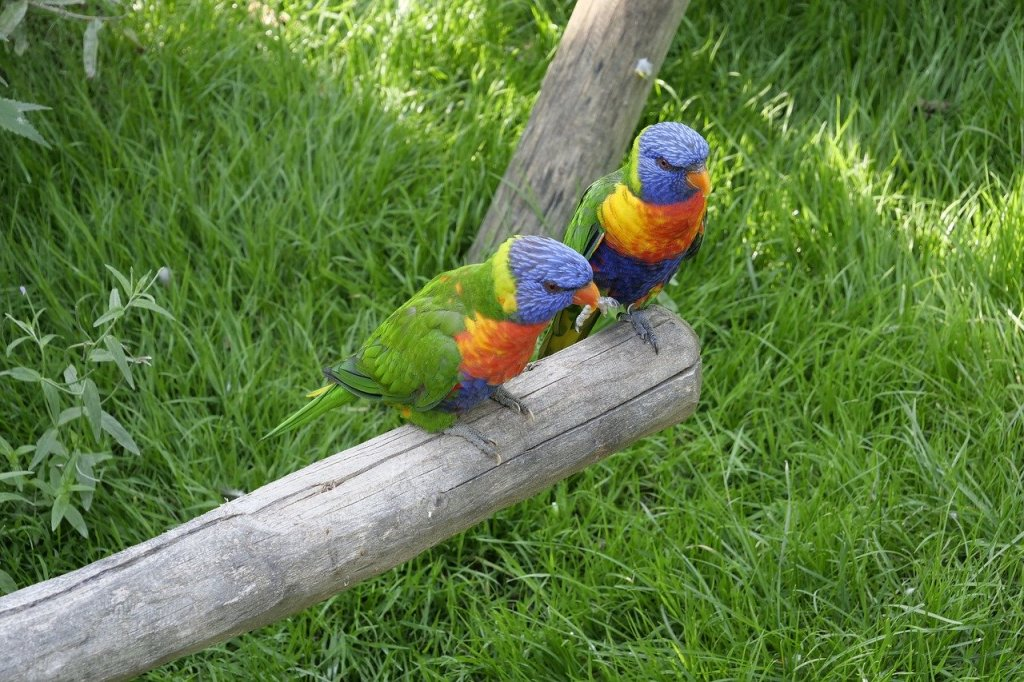 Bird parrot nature travel
