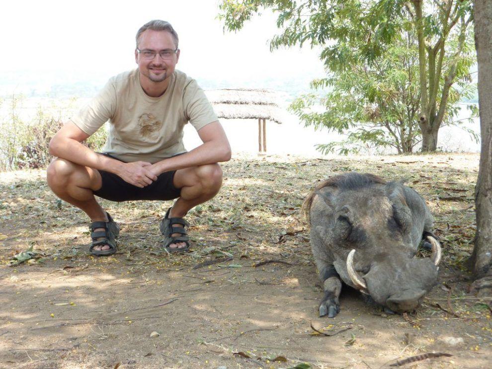 Africa Uganda Wild Boar Travel