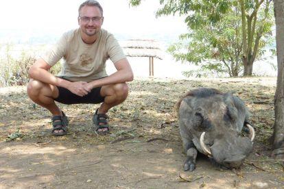 Afrika Uganda vildsvinresor