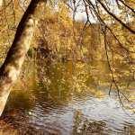 Tyskland Mölln Sø Skov Natur beskåret Rejser