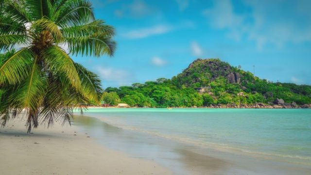 Africa Seychelles Beach Palm Travel
