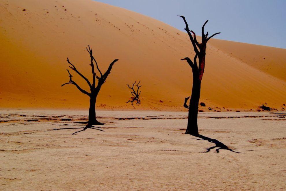 Afrika Safari Rejser