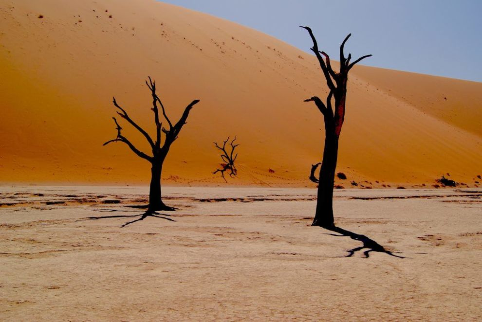 Voyage safari en Afrique